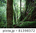 屋久島の森 81398372