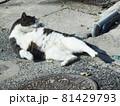 日向でまったりくつろぐ猫(お手入れ中) 81429793