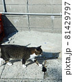 前を向いてしっかりと歩み出す猫(港町のお散歩) 81429797