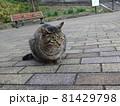 立ち止まって考える猫 81429798