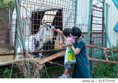 網走原生牧場観光センターのヤギに餌をあげる女の子 81472444