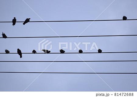 五線譜イメージ電線と小鳥  電線に止まる小鳥たち 81472688