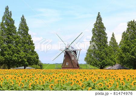 あけぼの山農業公園 ひまわりと風車 81474976