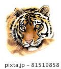 水彩画 トラ 81519858