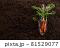 Fresh organic carrots with greens on ground background 81529077