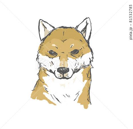 柴犬 81532785