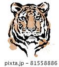 墨絵の虎 81558886