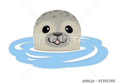 水面から顔を出すアザラシ 81561260