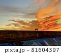 夕日と猫 81604397