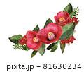 水彩で描かれた椿の花 81630234