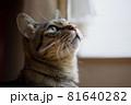 やわらかな眼差しで飼い主を見上げる猫 81640282