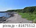 城ヶ島の海岸段丘 81675512
