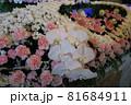 胡蝶蘭が入った花祭壇 81684911