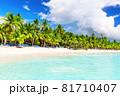 Coconut Palm trees on white sandy beach in Saona island, Dominican Republic. 81710407