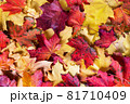 Colorful autumn leaves, yellow, orange, brown leaves on ground in fall season. 81710409