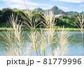 ススキがなびく秋の田園風景 81779996