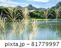 ススキがなびく秋の田園風景 81779997