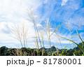 ススキがなびく秋の田園風景 81780001