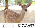 奈良公園の鹿 81783957