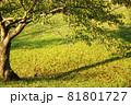 初秋イメージ 81801727