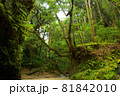 晩夏の森 81842010