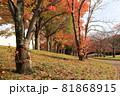 公園内の樹木が紅葉して秋が深まり遊歩道沿いには落葉が広がっている 81868915