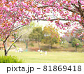 猿投運動公園の八重桜 81869418