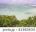 サンゴ礁の海 沖縄本島 81983630