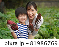 サツマイモを収穫する親子 81986769