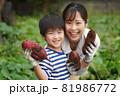 サツマイモを収穫する親子 81986772
