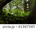 重なり合う木々の上に立ち並ぶ若木たち 81987085