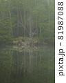 霧の水辺に立って湖面に映り込んでいる白骨のような木 81987088