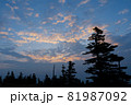 峠に立ち並んだ針葉樹林の上空の雲が朝陽に色づいていく 81987092