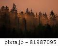 朝陽に照らされてオレンジ色に染まっていく朝靄の森 81987095
