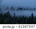 朝靄の中から現れた針葉樹の森 81987097