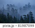 霧が少しずつ晴れていき峠の森が現れた 81987099