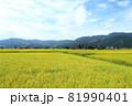 収穫期を迎え黄金色に輝く魚沼の水田風景 81990401