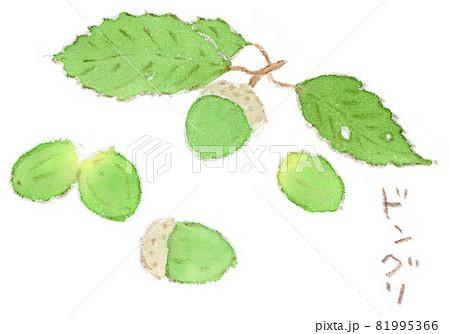 秋の風景、緑色のドングリ(団栗)の水彩画イラスト。雨上がりの森にて 81995366