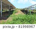 雑草が生い茂った太陽光発電所 81998967