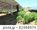 雑草が生い茂った太陽光発電所 81998974