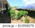 雑草が生い茂った太陽光発電所 81998976