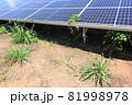 雑草が生い茂った太陽光発電所 81998978