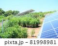雑草が生い茂った太陽光発電所 81998981