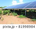 雑草が生い茂った太陽光発電所 81998984