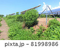 雑草が生い茂った太陽光発電所 81998986