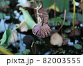 葉 花 緑 82003555