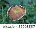 葉 花 緑 82003557