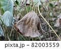 葉 花 緑 82003559