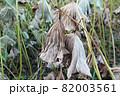 葉 花 緑 82003561
