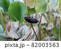 葉 花 緑 82003563